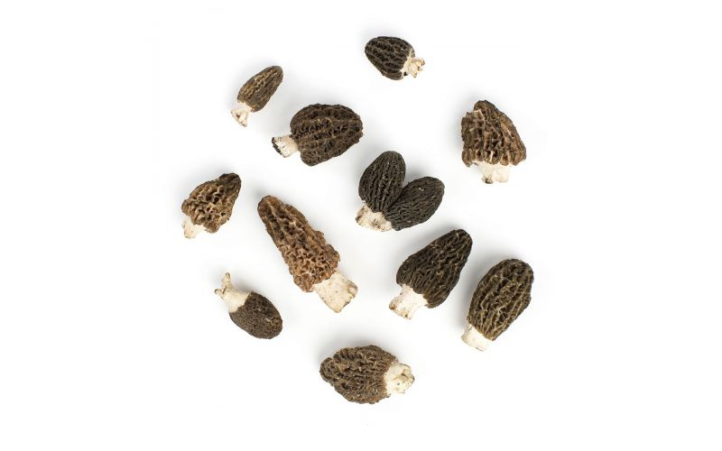 Black Conica Morel Mushrooms