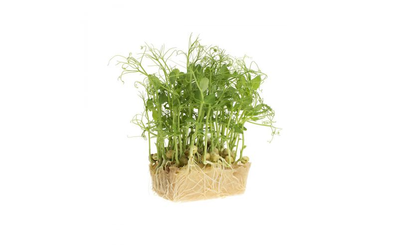 Affilla Living Cress